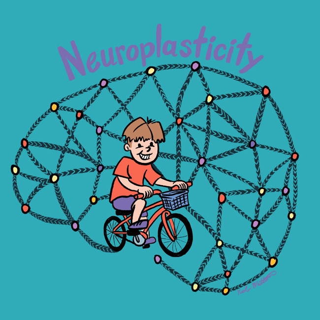 Illustration explaining Neuroplasticity, a boy riding his bike to conect a brain.